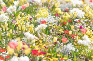 spring201943FTHG7175_TP_V.jpg